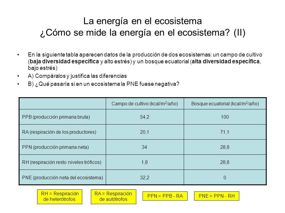 La energía en el ecosistema ¿Cómo se mide la energía en el ecosistema
