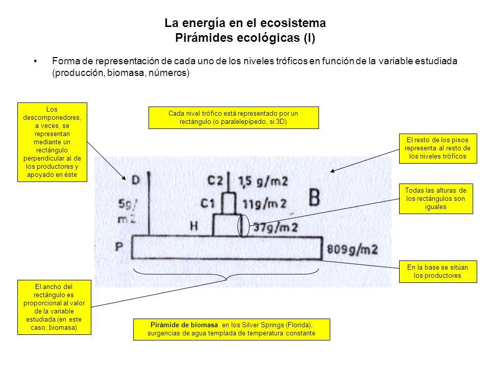 La energía en el ecosistema Pirámides ecológicas (I)