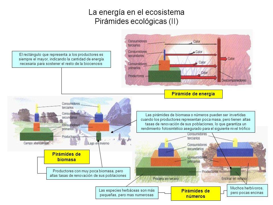 La energía en el ecosistema Pirámides ecológicas (II)