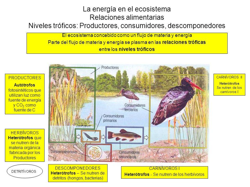 La energía en el ecosistema Relaciones alimentarias Niveles tróficos: Productores, consumidores, descomponedores
