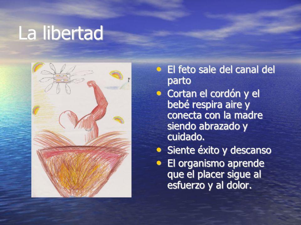 La libertad El feto sale del canal del parto