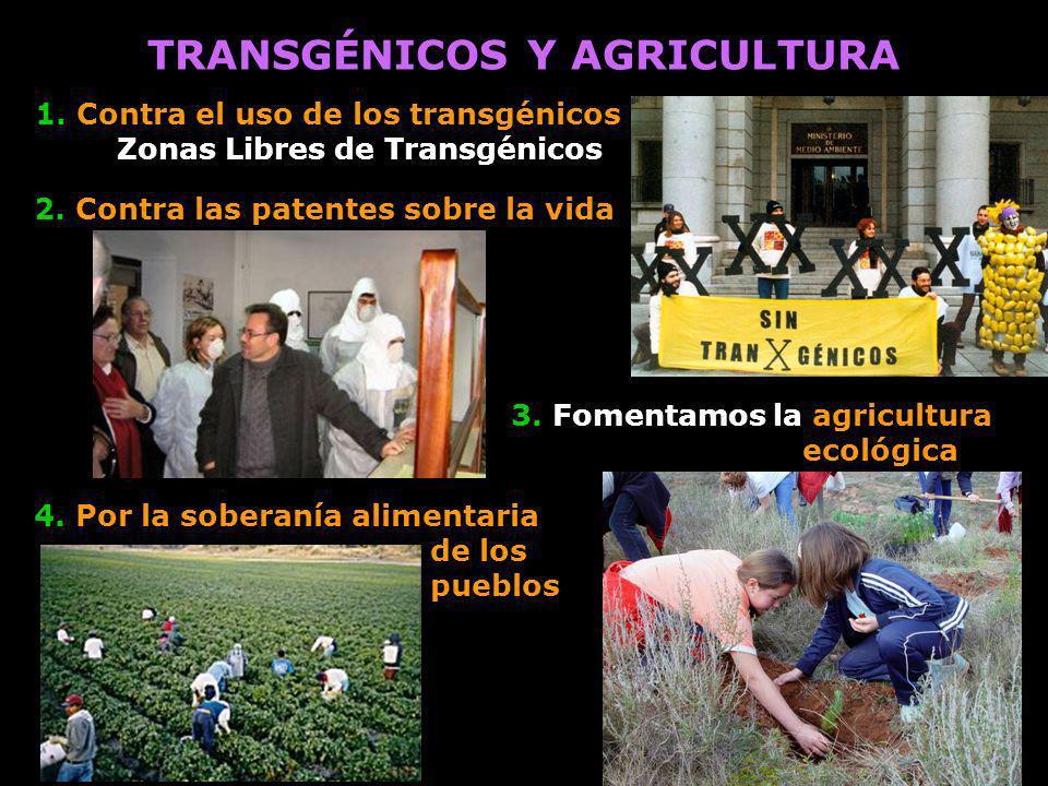 TRANSGÉNICOS Y AGRICULTURA