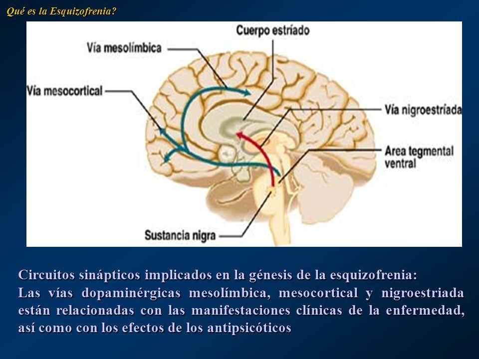 Circuitos sinápticos implicados en la génesis de la esquizofrenia: