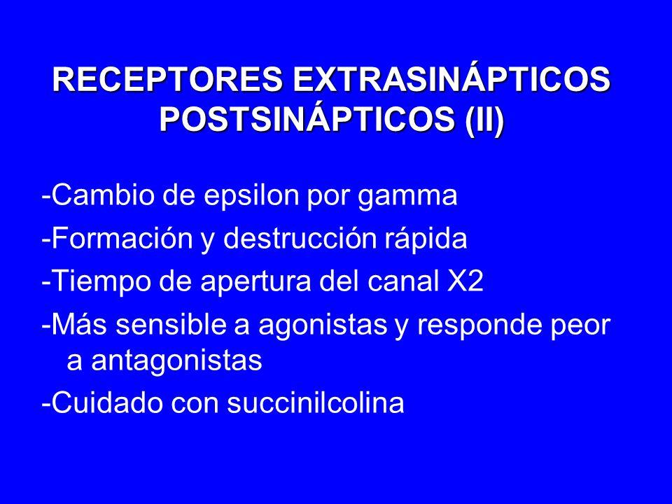 RECEPTORES EXTRASINÁPTICOS POSTSINÁPTICOS (II)