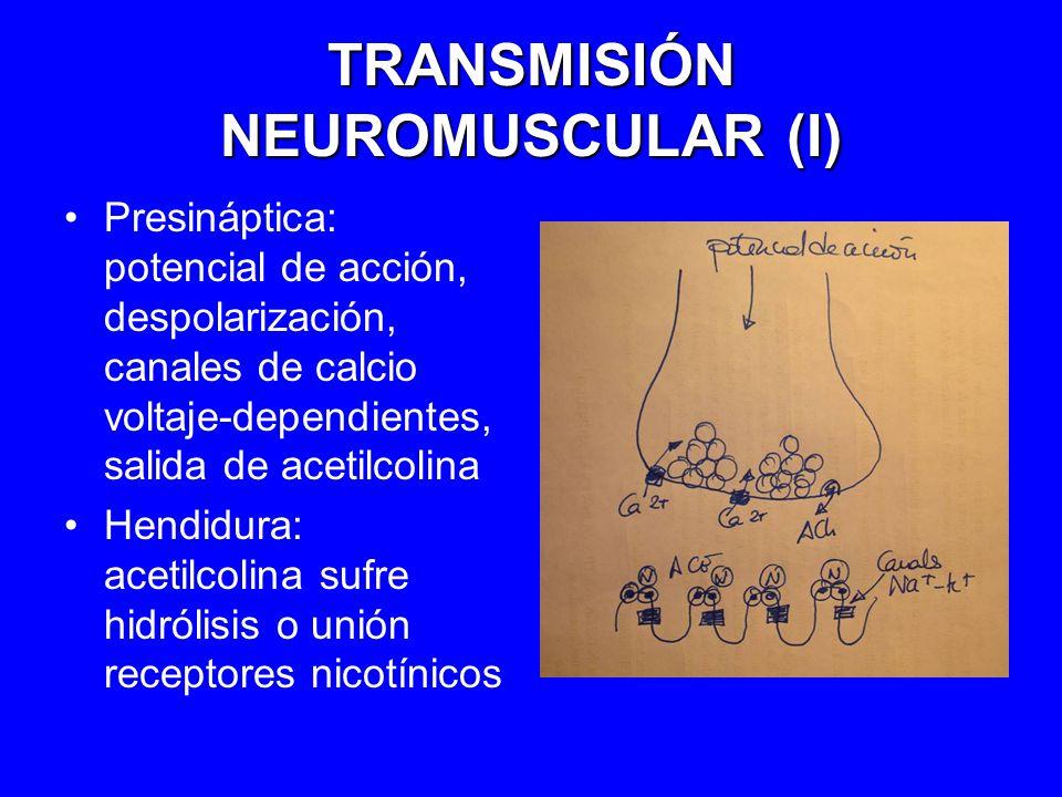 TRANSMISIÓN NEUROMUSCULAR (I)
