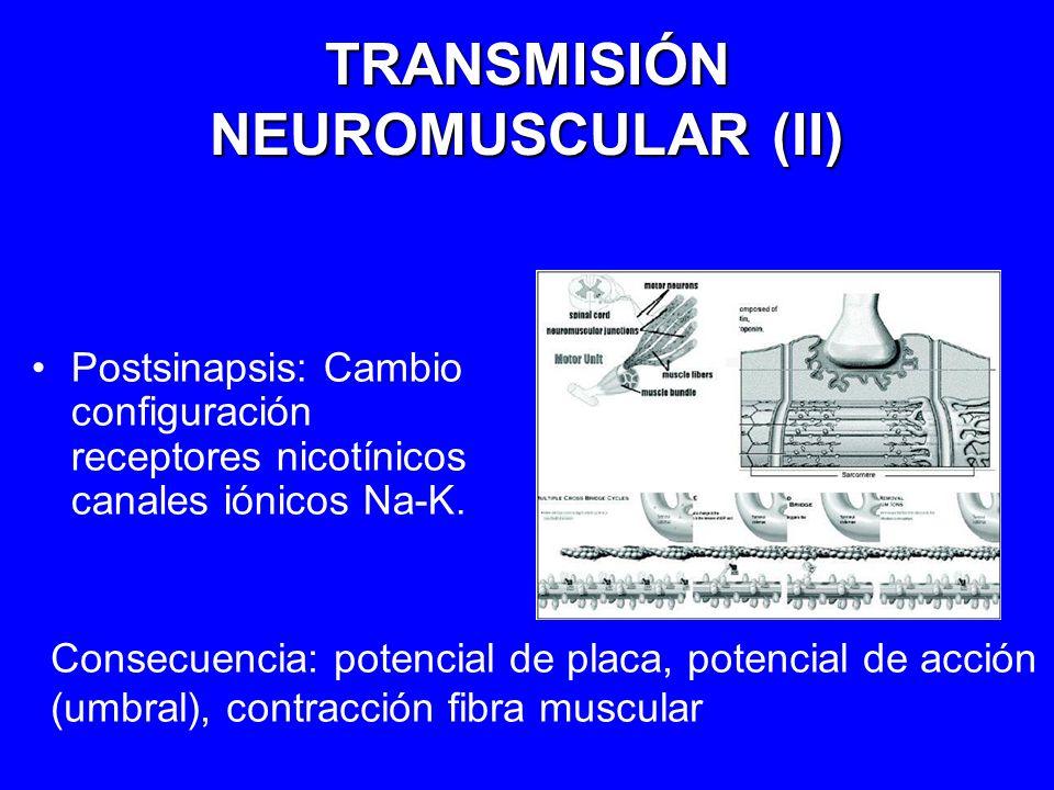 TRANSMISIÓN NEUROMUSCULAR (II)