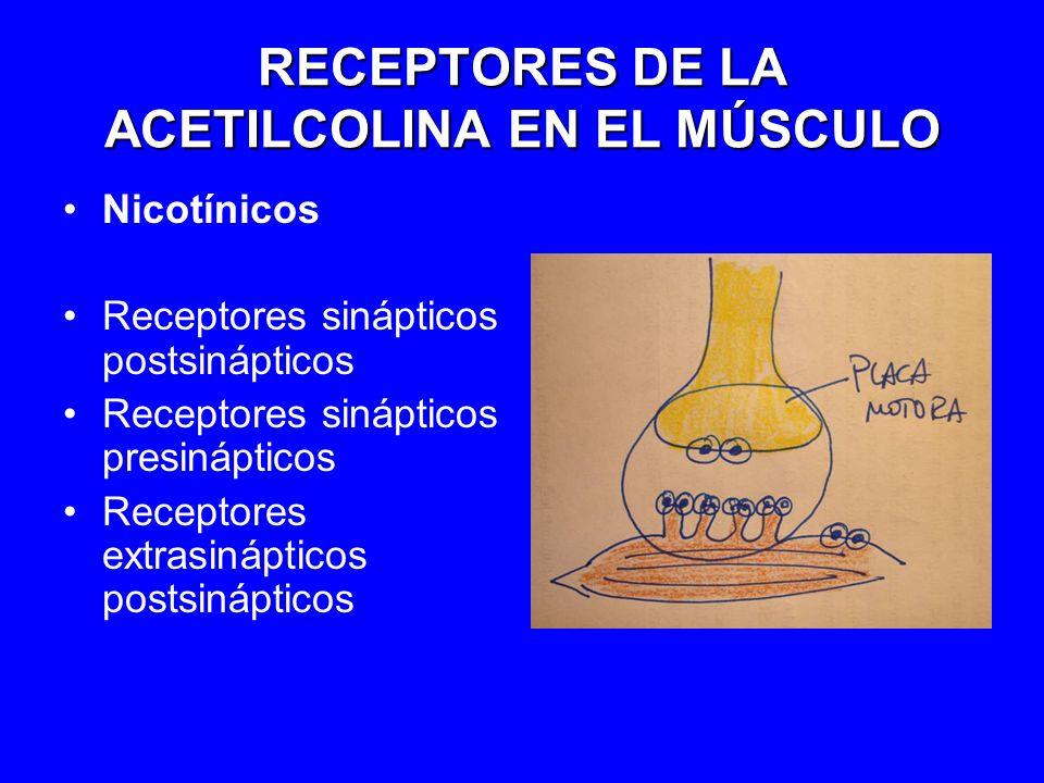 RECEPTORES DE LA ACETILCOLINA EN EL MÚSCULO
