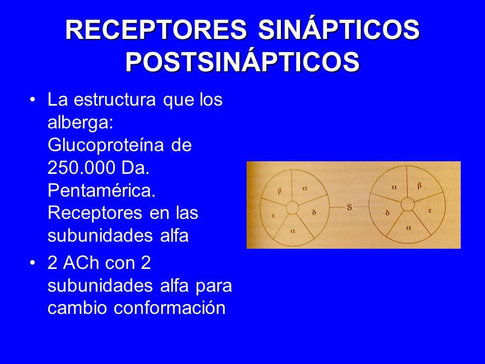 RECEPTORES SINÁPTICOS POSTSINÁPTICOS