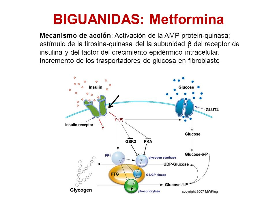 BIGUANIDAS: Metformina