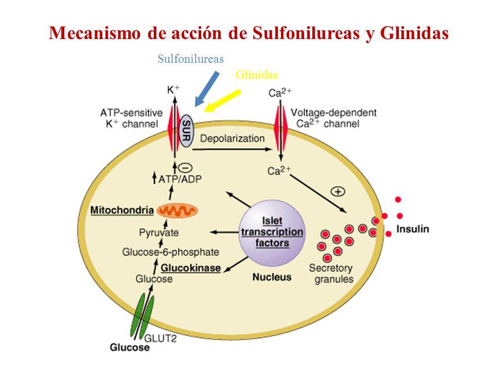 Mecanismo de acción de Sulfonilureas y Glinidas