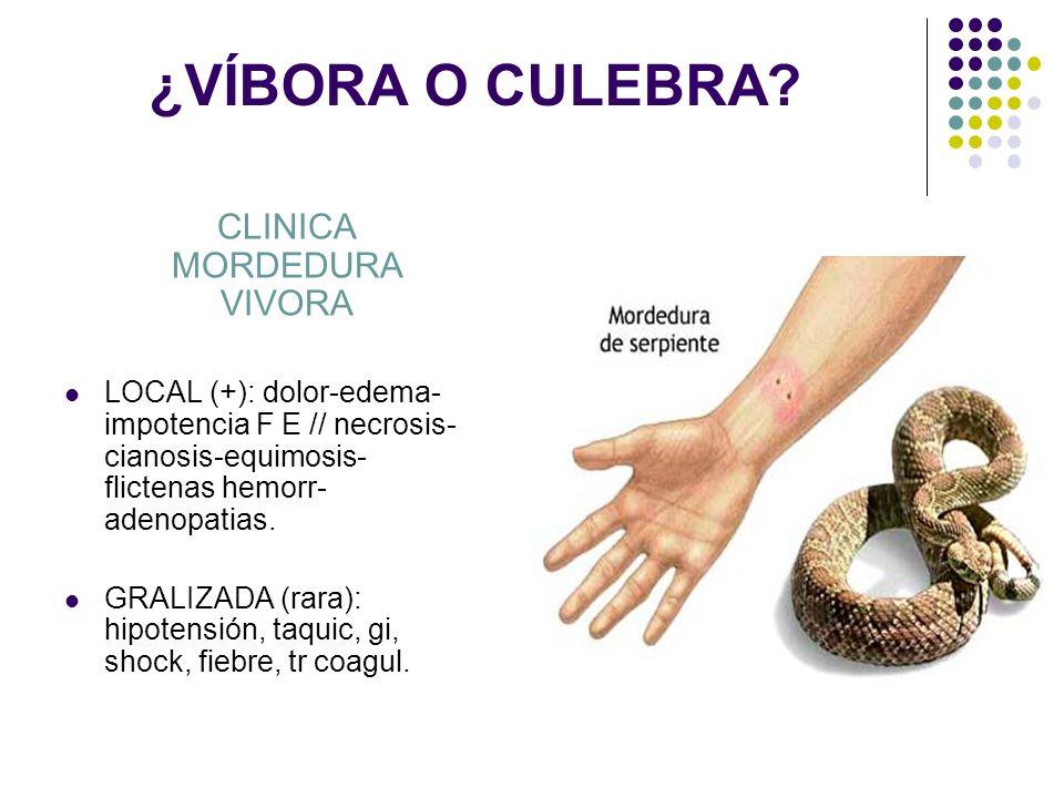 CLINICA MORDEDURA VIVORA