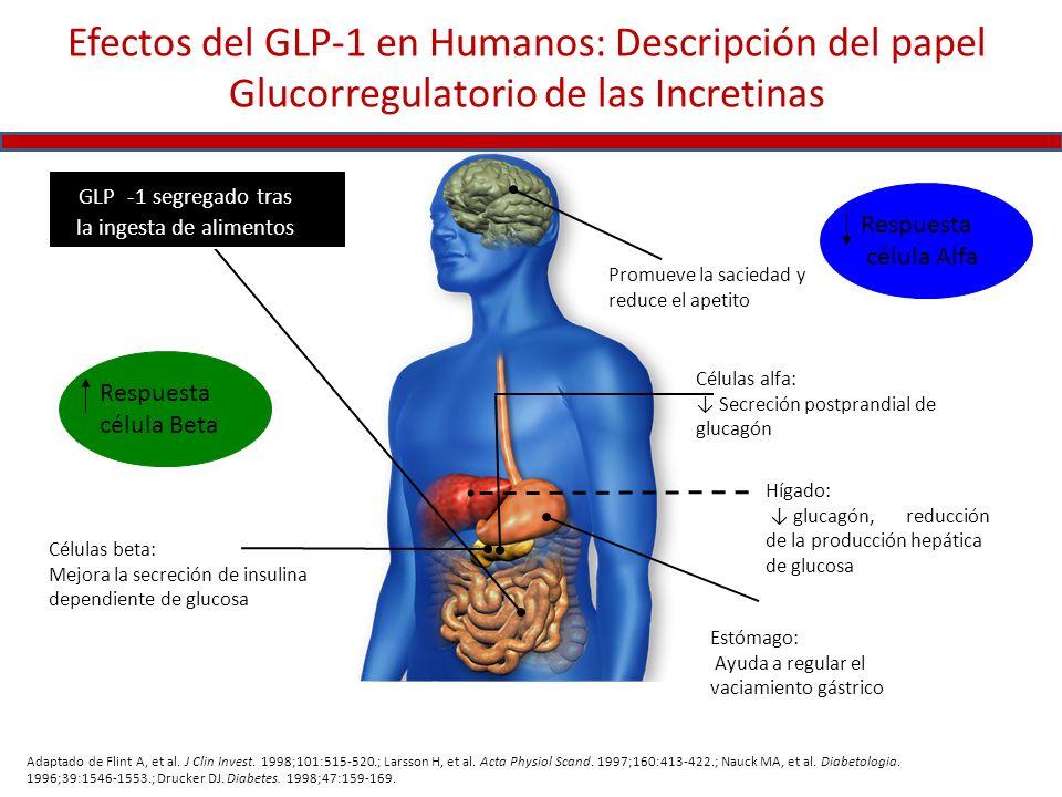 Efectos del GLP-1 en Humanos: Descripción del papel Glucorregulatorio de las Incretinas