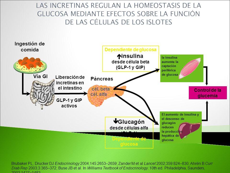 Dependiente de glucosa desde célula beta (GLP-1 y GIP)