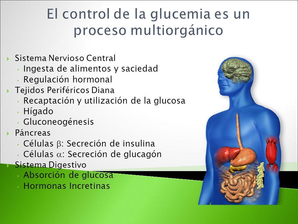 El control de la glucemia es un proceso multiorgánico