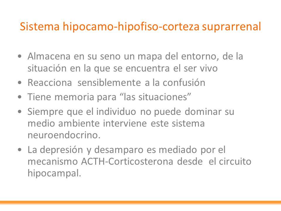 Sistema hipocamo-hipofiso-corteza suprarrenal