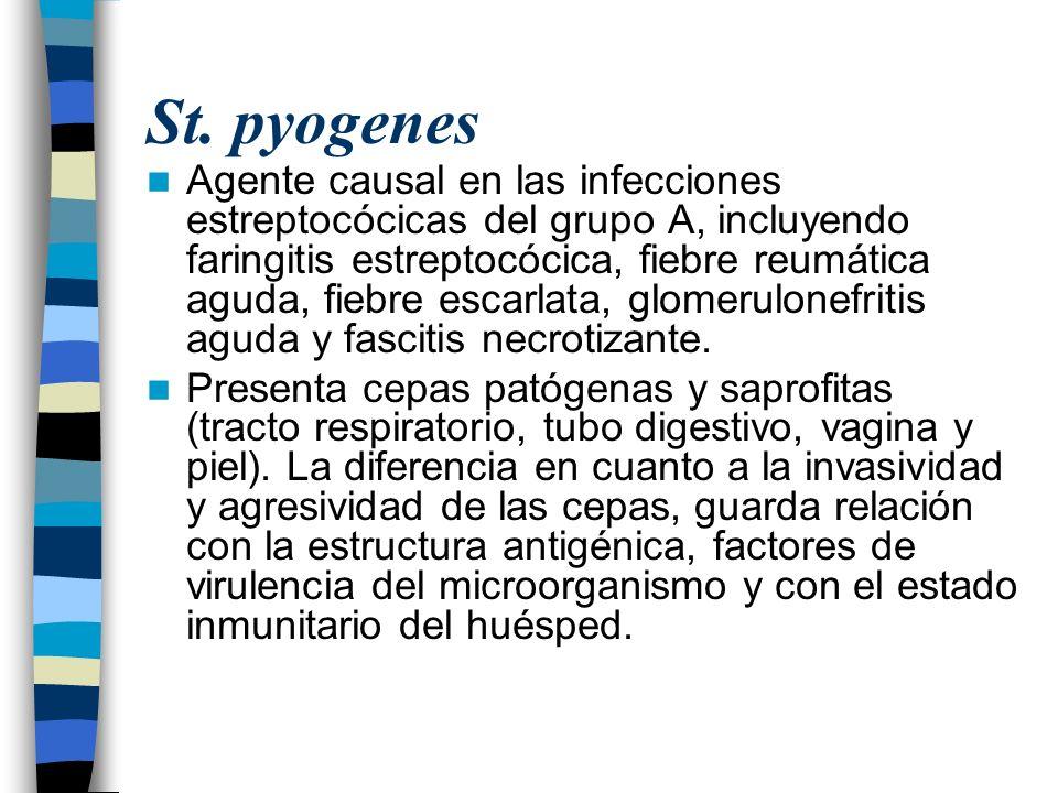 St. pyogenes