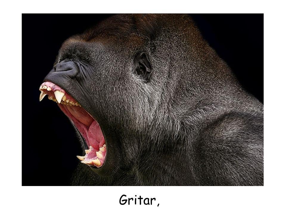 Gritar,