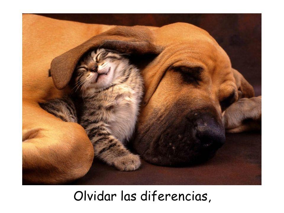 Olvidar las diferencias,