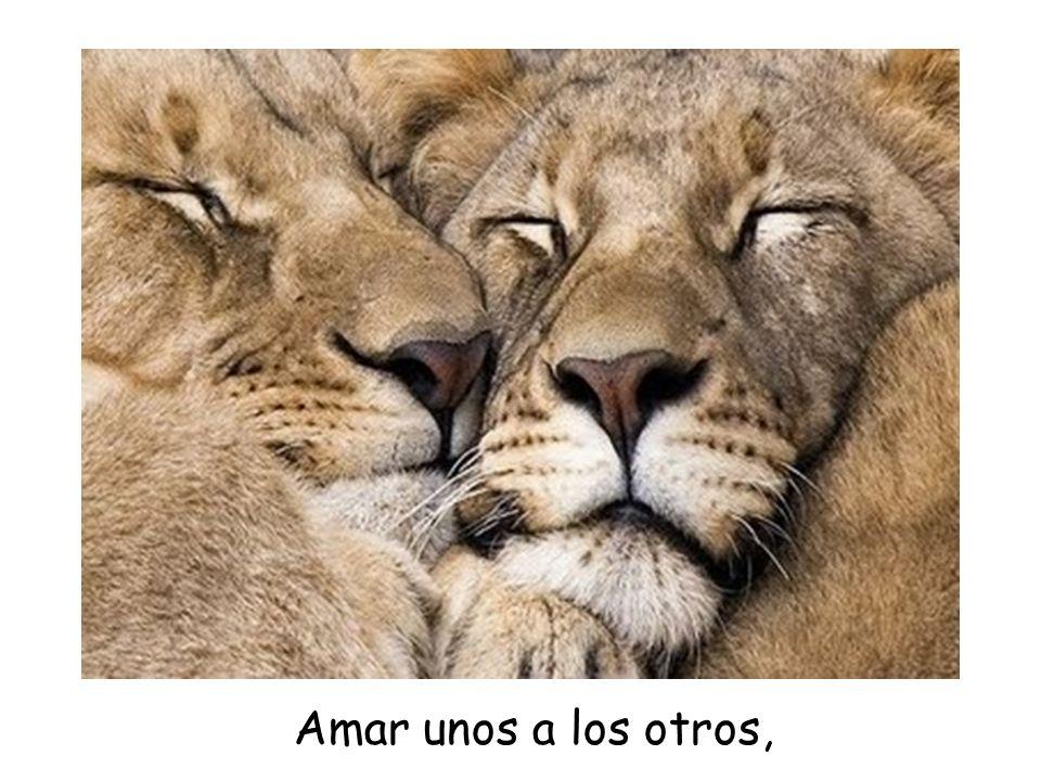 Amar unos a los otros,