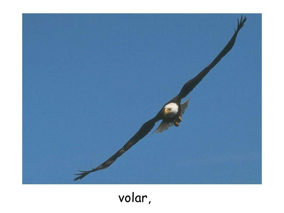 volar,