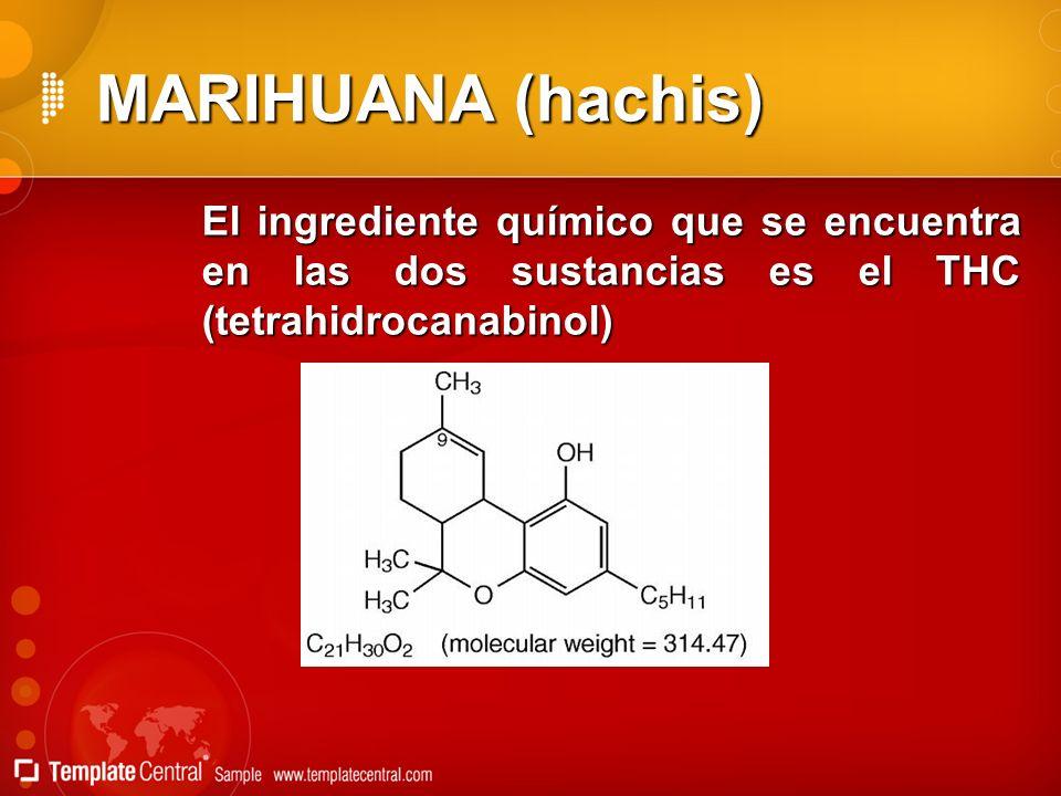 MARIHUANA (hachis) El ingrediente químico que se encuentra en las dos sustancias es el THC (tetrahidrocanabinol)