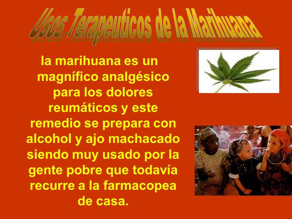 Usos Terapeuticos de la Marihuana