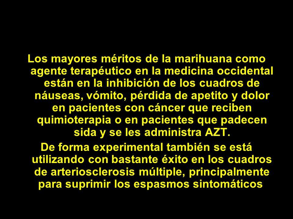 Los mayores méritos de la marihuana como agente terapéutico en la medicina occidental están en la inhibición de los cuadros de náuseas, vómito, pérdida de apetito y dolor en pacientes con cáncer que reciben quimioterapia o en pacientes que padecen sida y se les administra AZT.