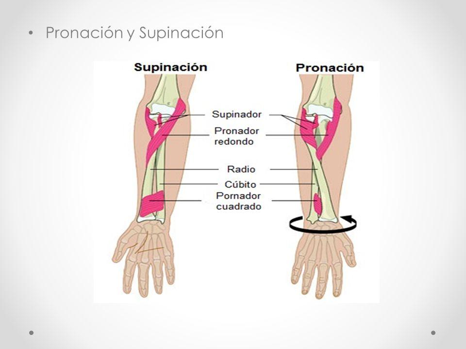 Pronación y Supinación