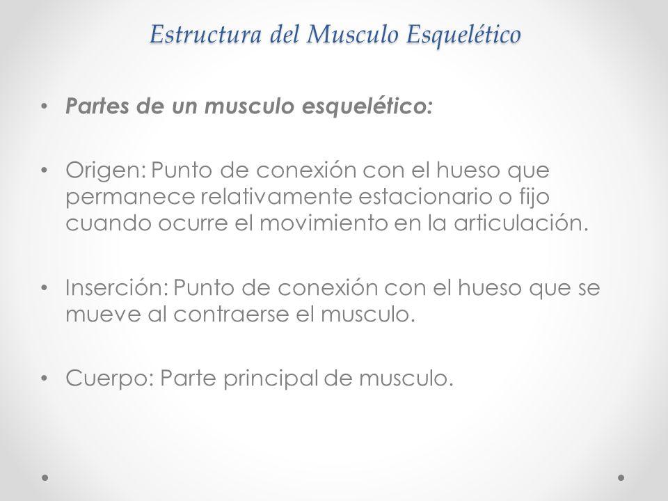 Estructura del Musculo Esquelético
