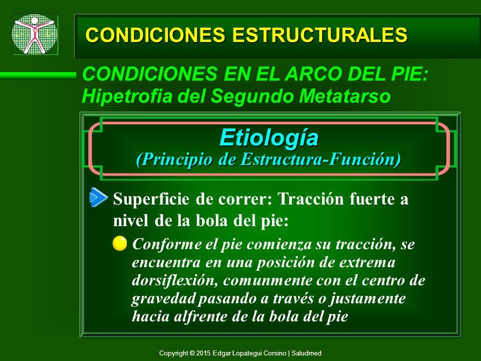 Prof. Edgar Lopategui Corsino M.A. Fisiología del ...