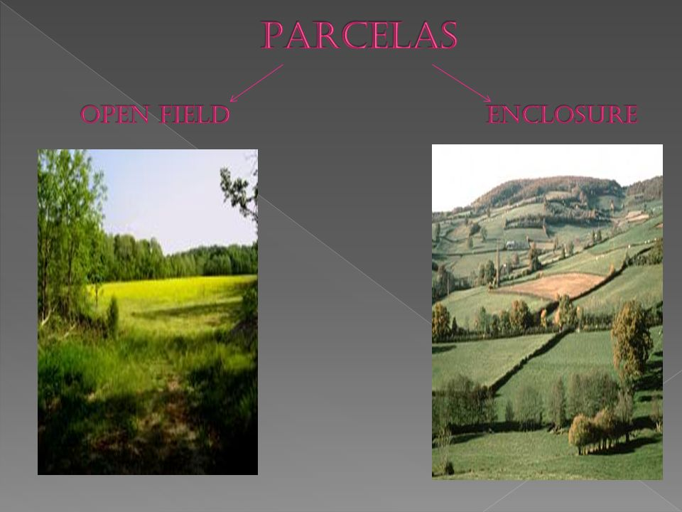 PARCELAS OPEN FIELD ENCLOSURE