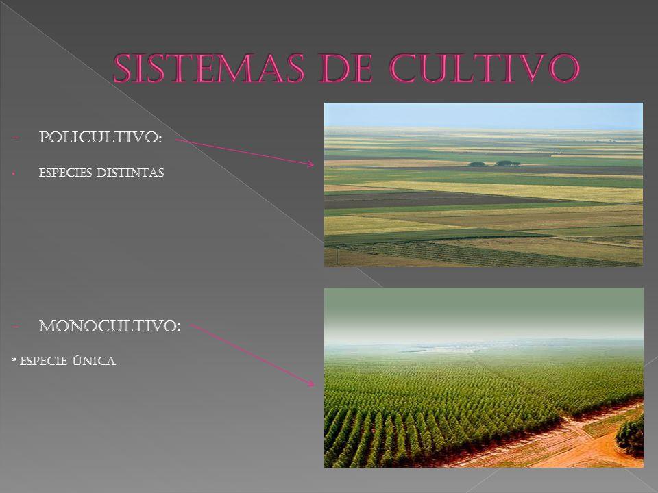 SISTEMAS DE CULTIVO POLICULTIVO: MONOCULTIVO: ESPECIES DISTINTAS