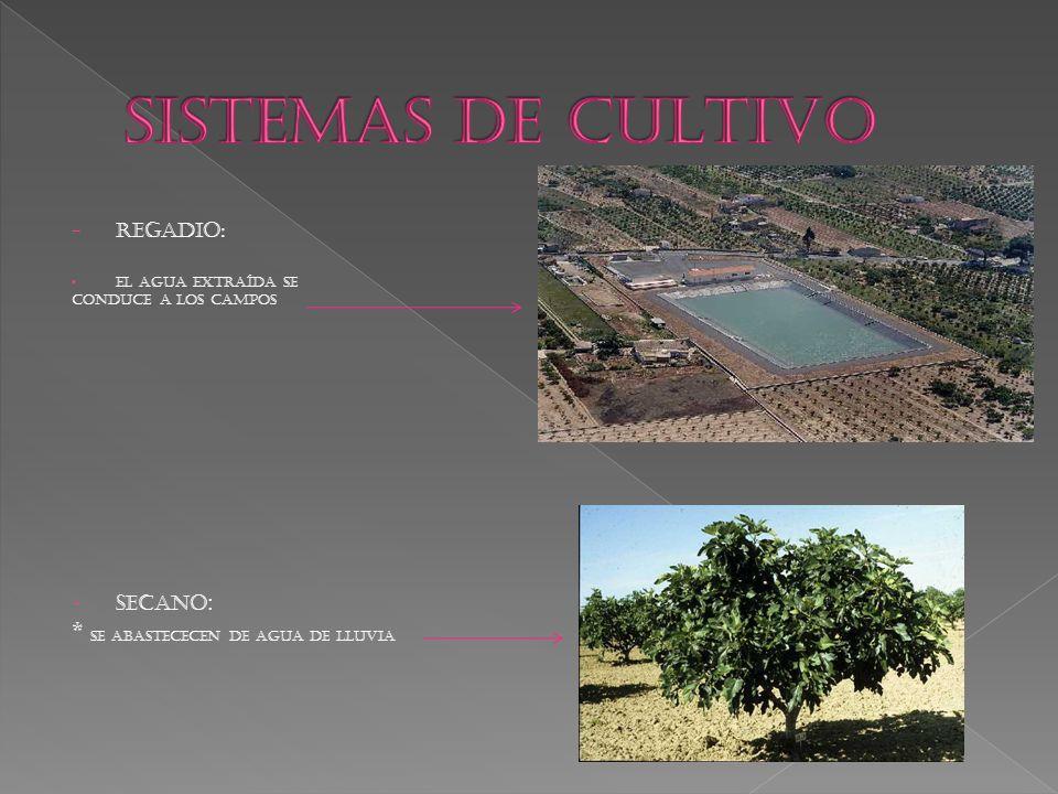 SISTEMAS DE CULTIVO * SE ABASTECECEN DE AGUA DE LLUVIA REGADIO: