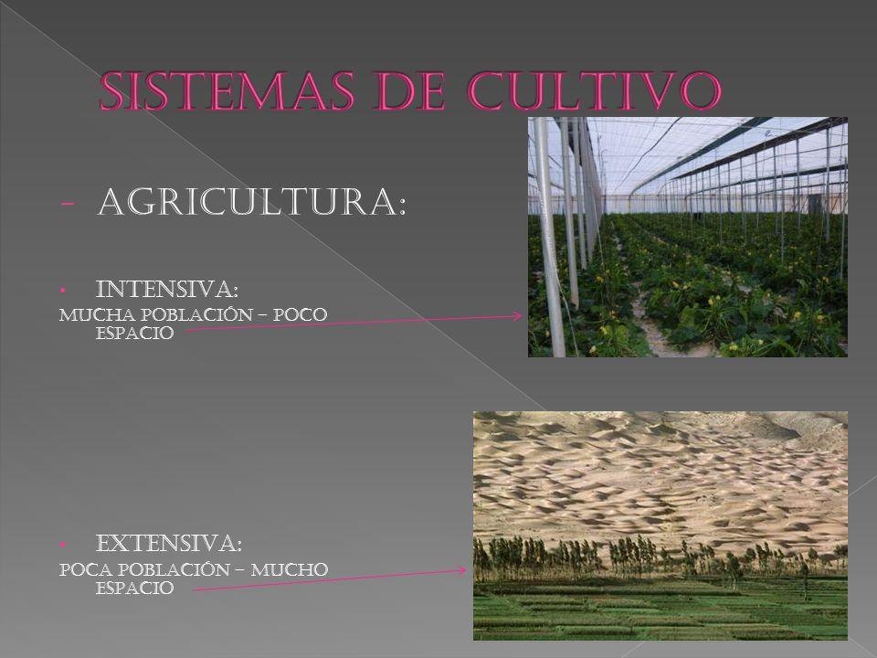 SISTEMAS DE CULTIVO AGRICULTURA: INTENSIVA: EXTENSIVA: