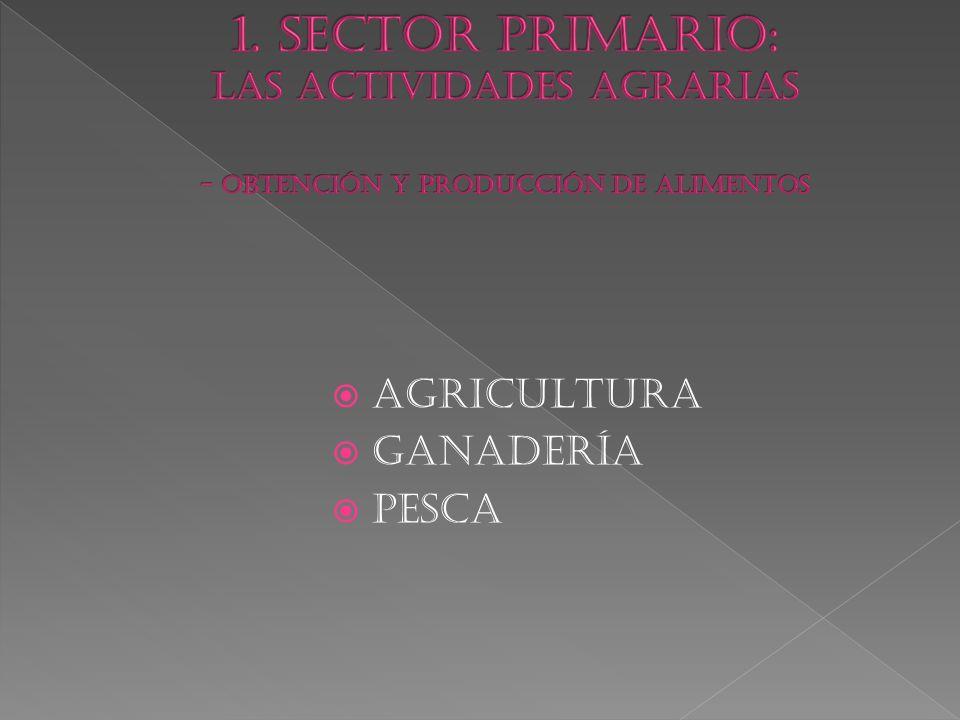 1. SECTOR PRIMARIO: LAS ACTIVIDADES AGRARIAS - OBTENCIÓN Y PRODUCCIÓN DE ALIMENTOS