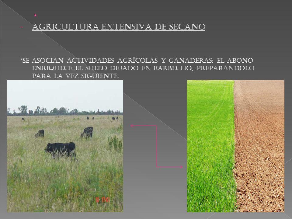 . AGRICULTURA EXTENSIVA DE SECANO