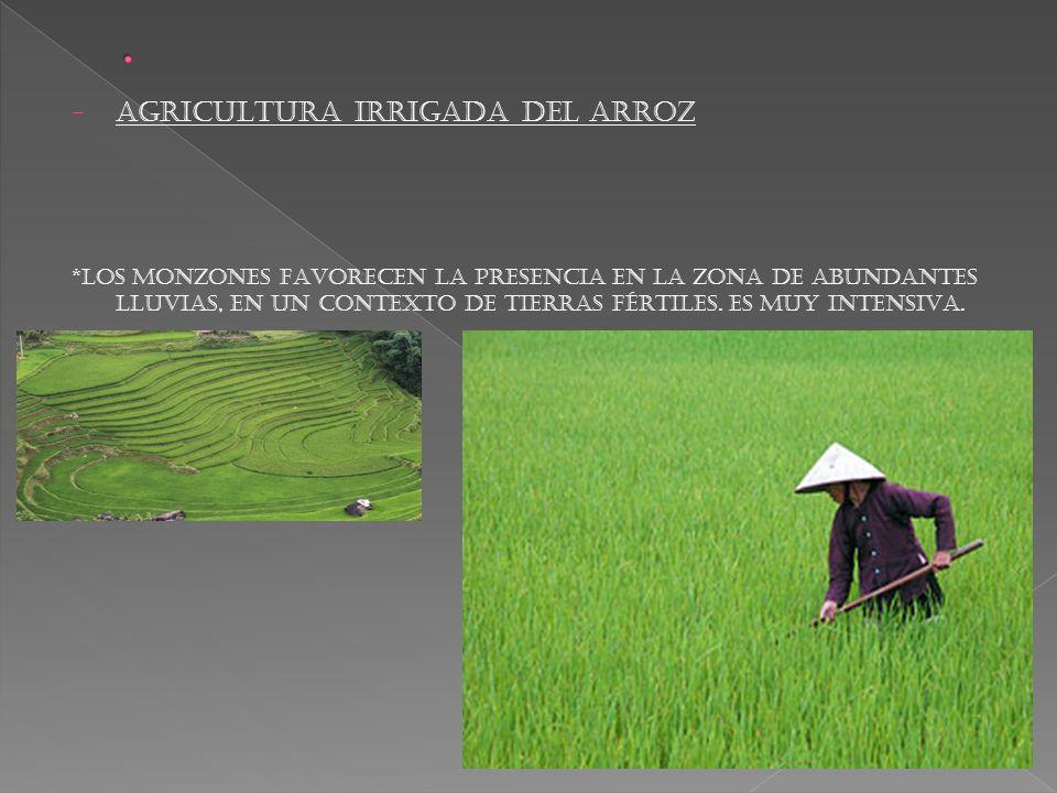 . AGRICULTURA IRRIGADA DEL ARROZ