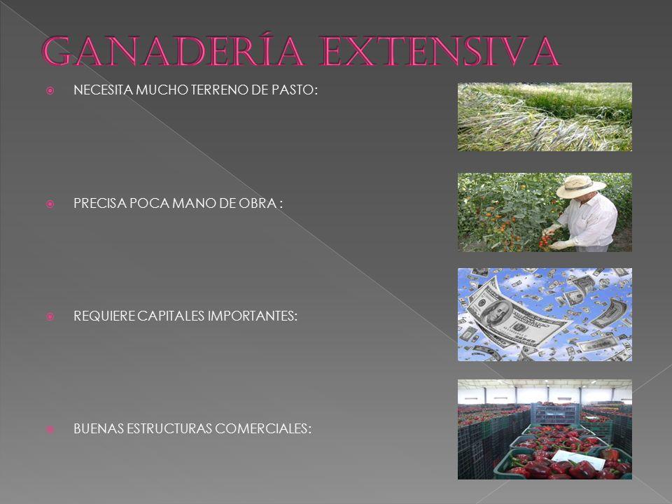 GANADERÍA EXTENSIVA NECESITA MUCHO TERRENO DE PASTO: