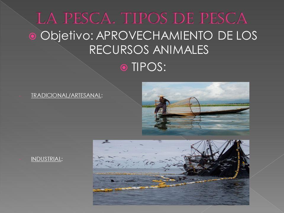 Objetivo: APROVECHAMIENTO DE LOS RECURSOS ANIMALES