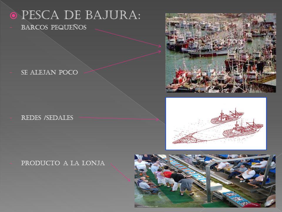PESCA DE BAJURA: BARCOS PEQUEÑOS Se alejan poco Redes /sedales