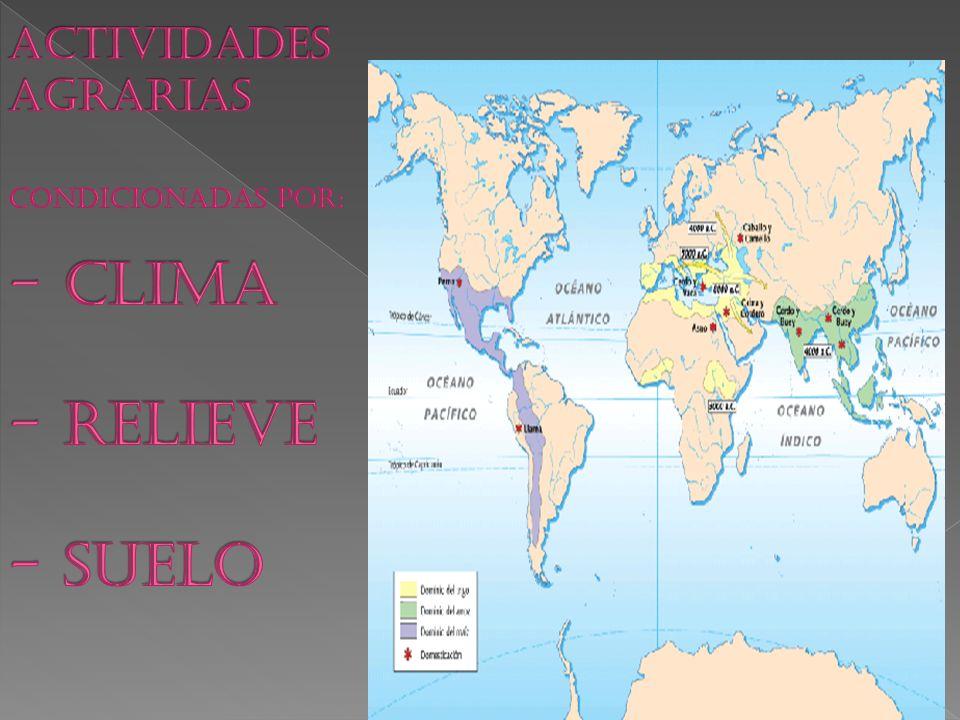 ACTIVIDADES AGRARIAS CONDICIONADAS POR: - CLIMA - RELIEVE - SUELO