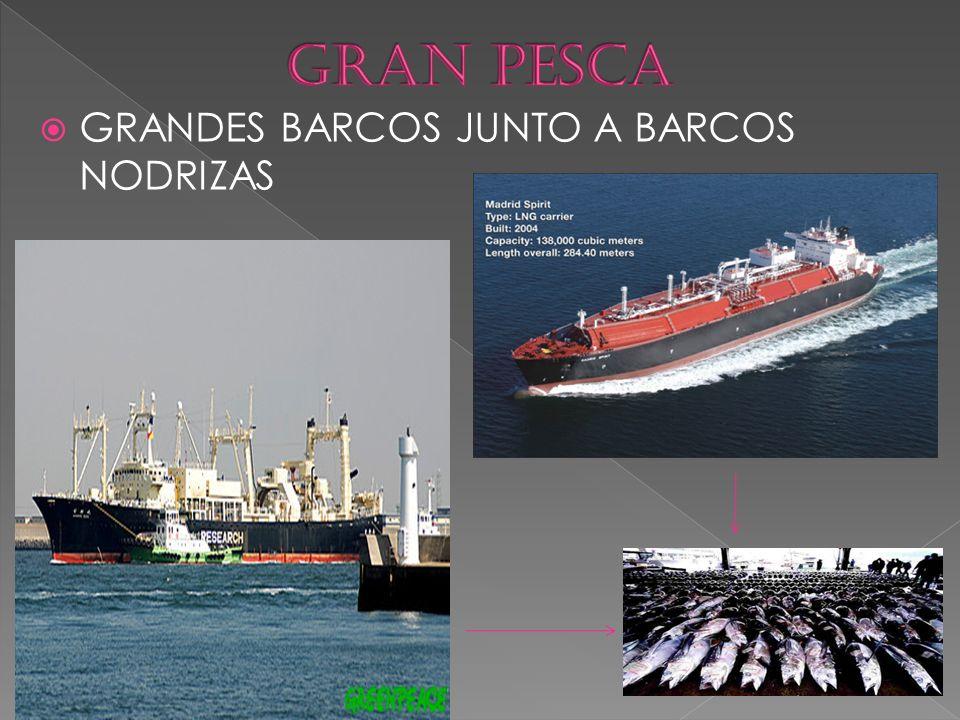 GRAN PESCA GRANDES BARCOS JUNTO A BARCOS NODRIZAS