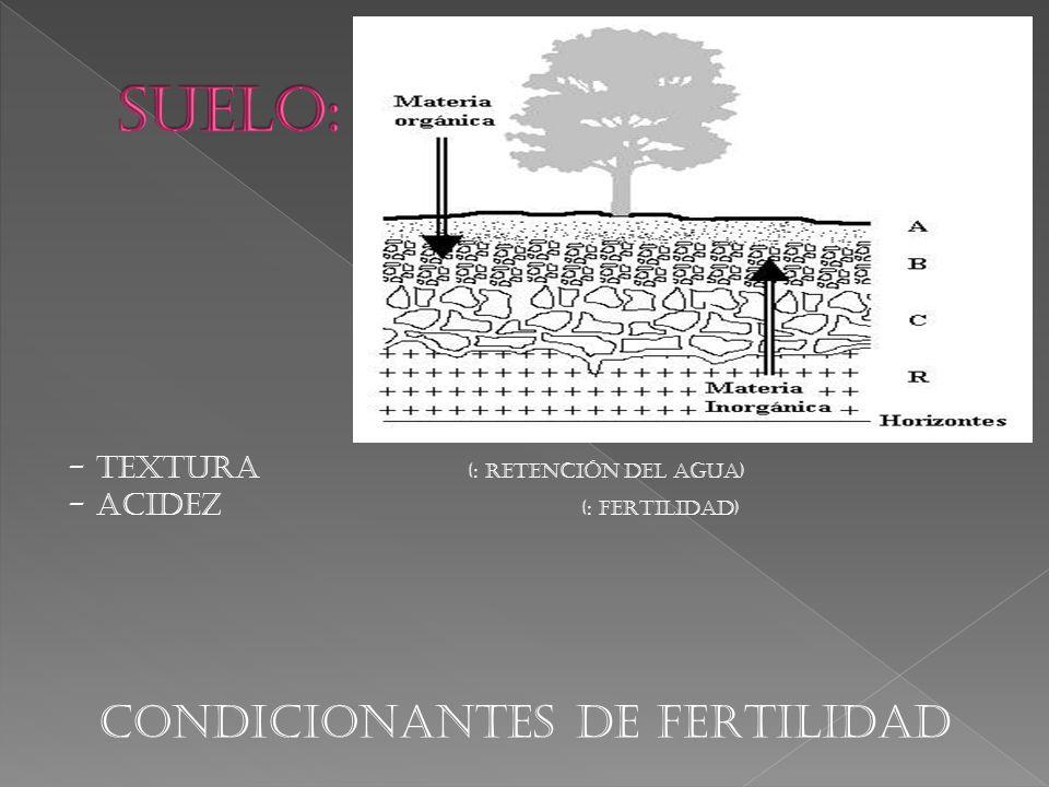 CONDICIONANTES DE FERTILIDAD
