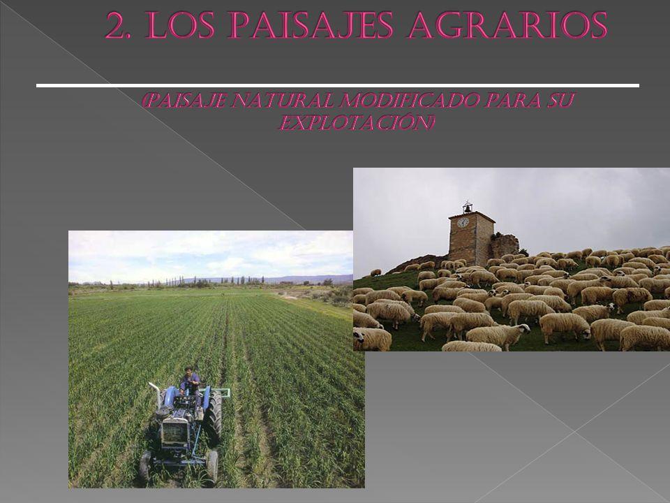 2. LOS PAISAJES AGRARIOS (PAISAJE NATURAL MODIFICADO PARA SU EXPLOTACIÓN)