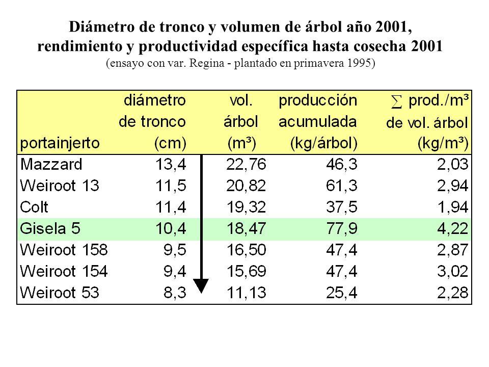 Diámetro de tronco y volumen de árbol año 2001, rendimiento y productividad específica hasta cosecha 2001 (ensayo con var.