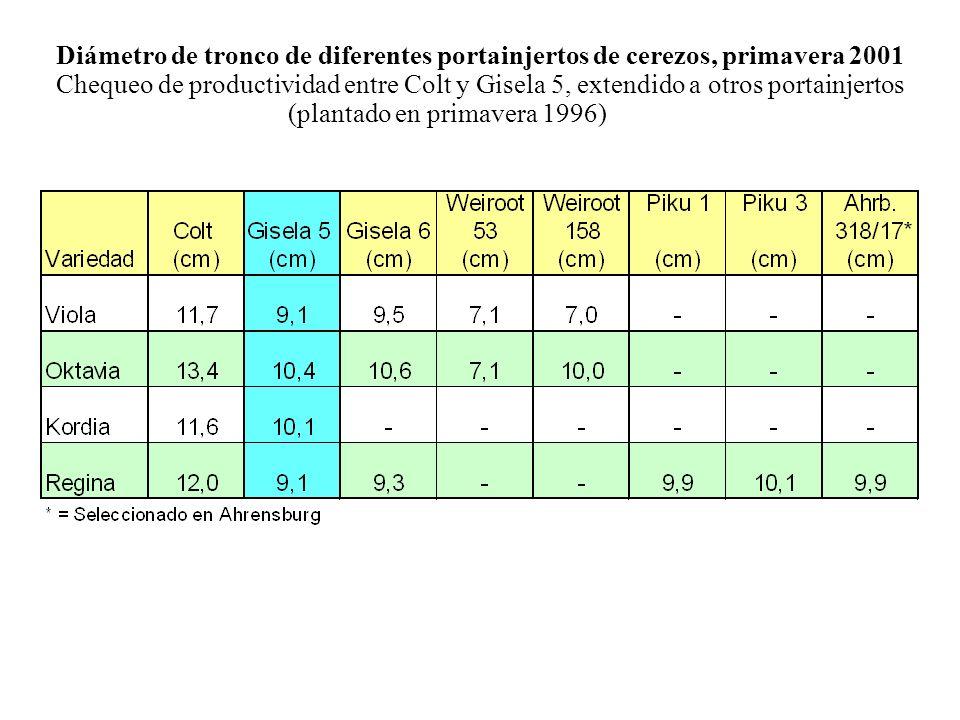 Diámetro de tronco de diferentes portainjertos de cerezos, primavera 2001 Chequeo de productividad entre Colt y Gisela 5, extendido a otros portainjertos (plantado en primavera 1996)