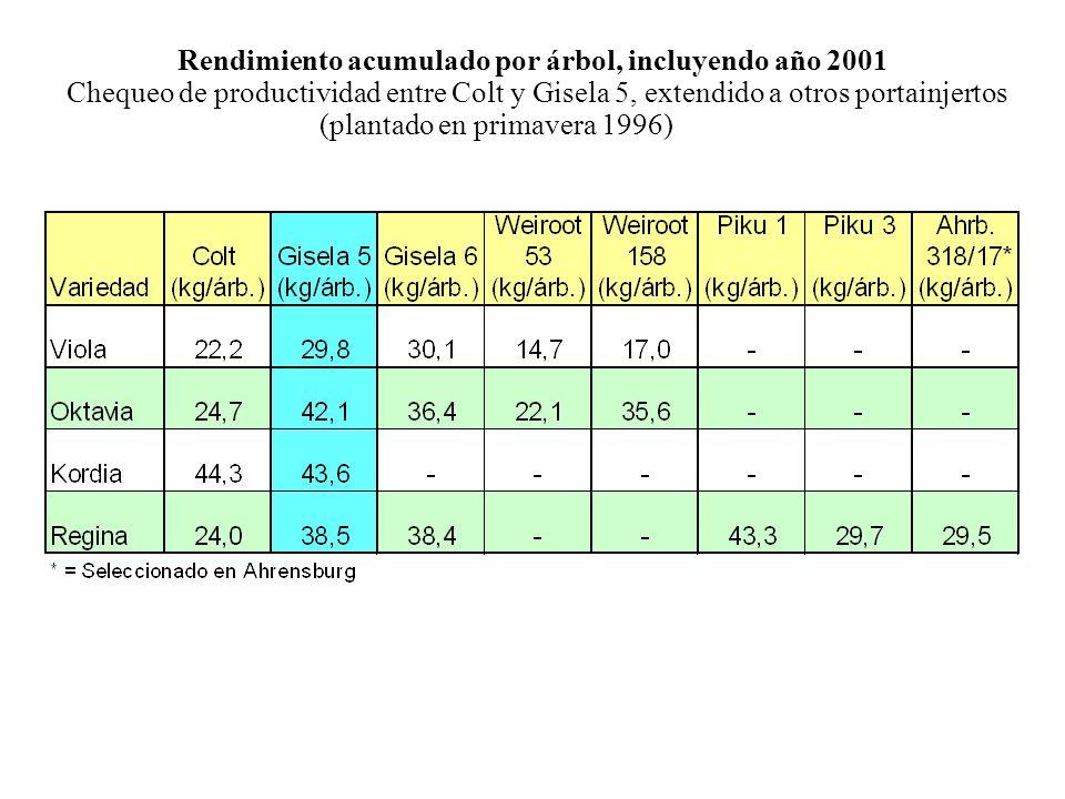 Rendimiento acumulado por árbol, incluyendo año 2001 Chequeo de productividad entre Colt y Gisela 5, extendido a otros portainjertos (plantado en primavera 1996)
