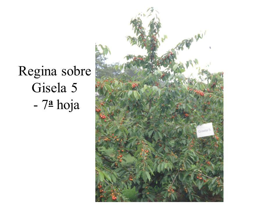 Regina sobre Gisela 5 - 7a hoja