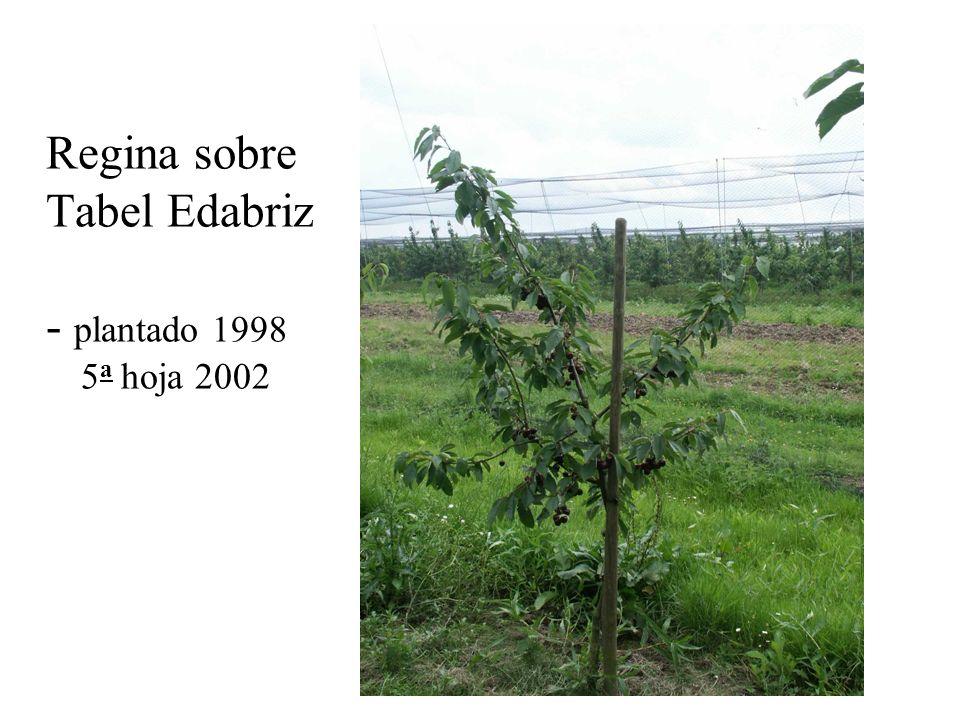 Regina sobre Tabel Edabriz - plantado 1998 5a hoja 2002