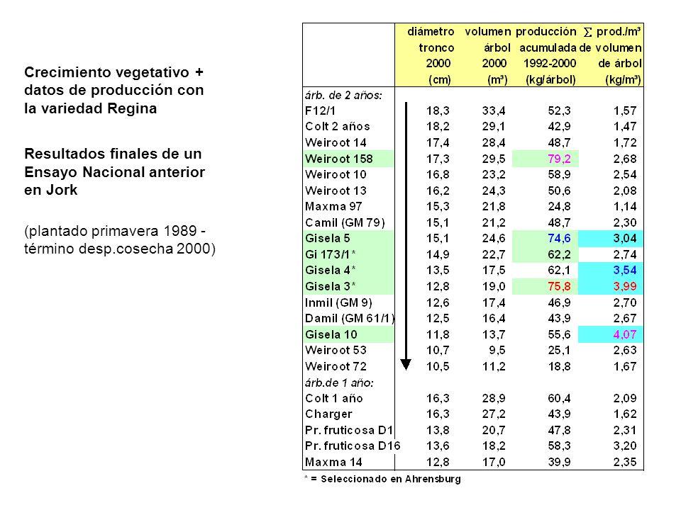 Crecimiento vegetativo + datos de producción con la variedad Regina Resultados finales de un Ensayo Nacional anterior en Jork (plantado primavera 1989 - término desp.cosecha 2000)